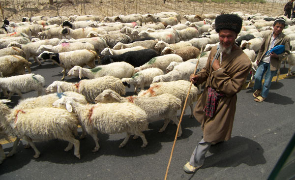 Sheep herder, Kashgar Xinjiang. Photo by Brian Lander.
