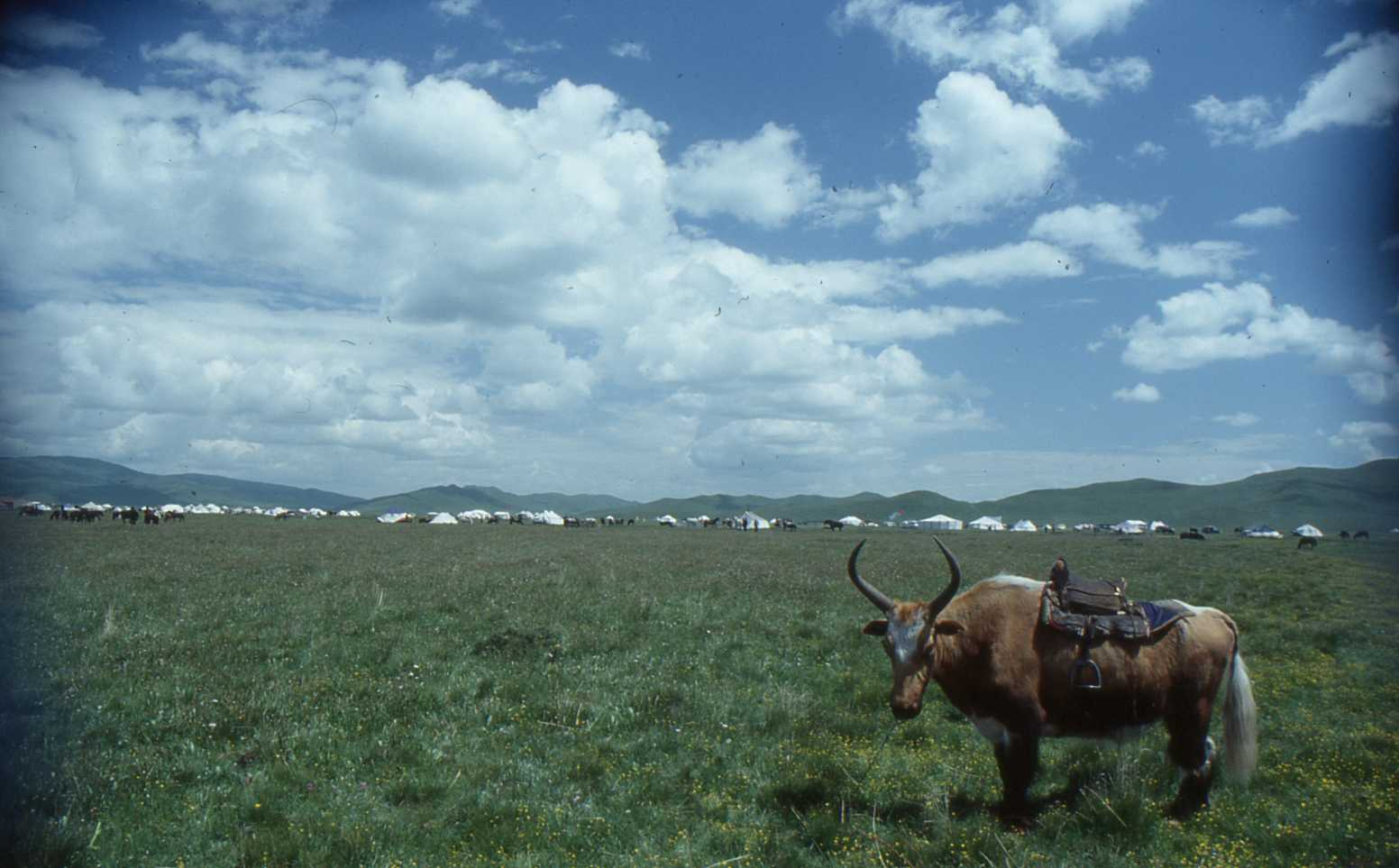 1991_07_Xiahe-Tibetan_Plateau_Grassland_009