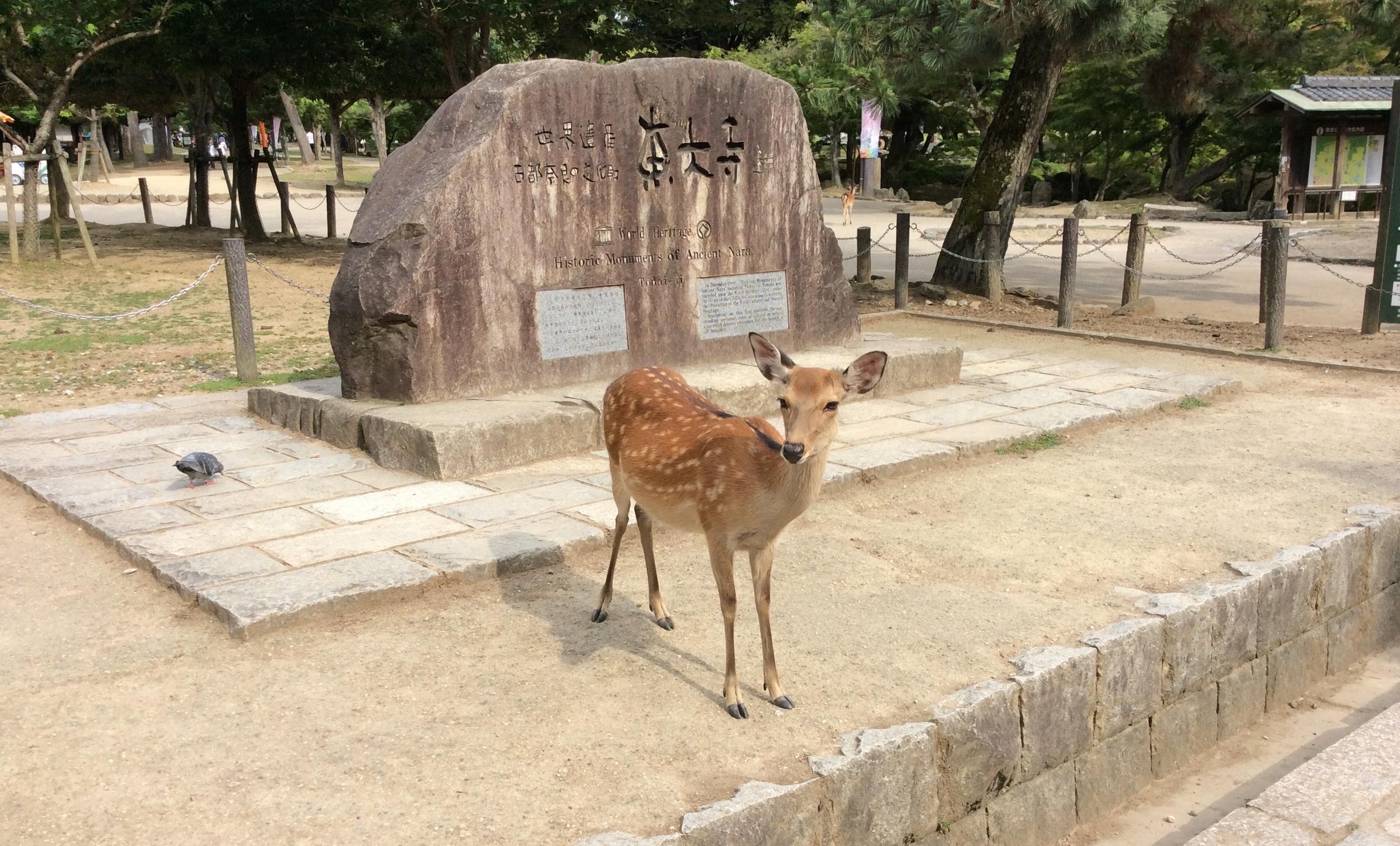 JLP-Deer