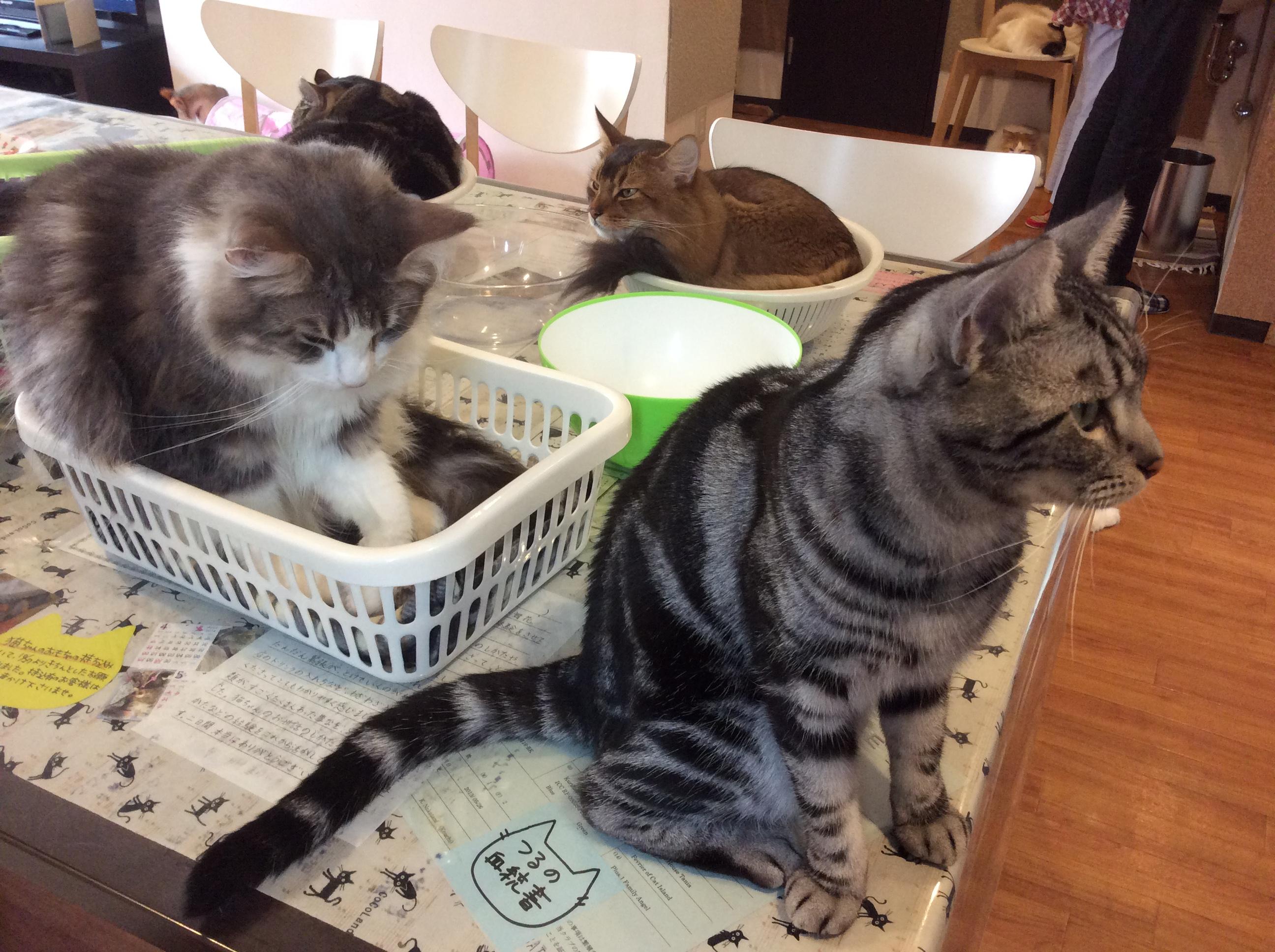 JLP-CatCafe_Osaka